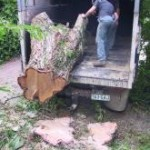 Thumbnail image for Stump Grinding and Stump Removal Brisbane